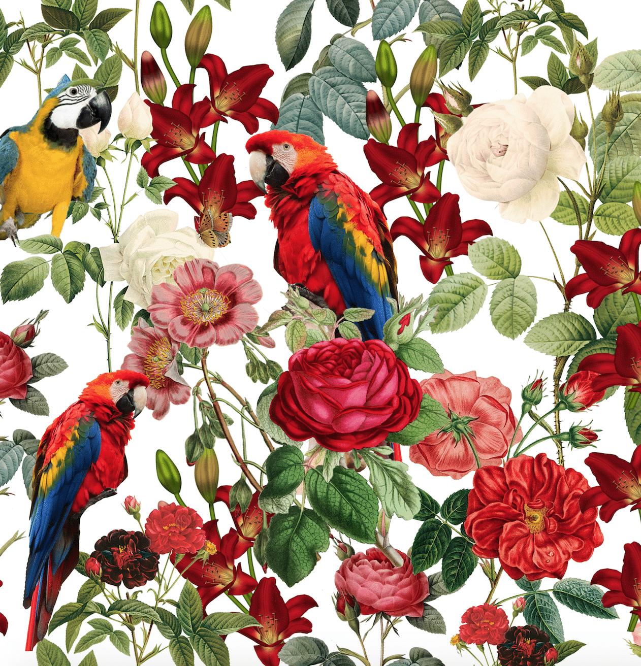 Guacamayo Print